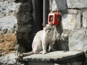 gatto a Pontboset